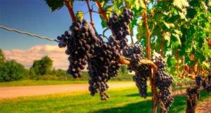 Luxury Limousine Winery Tours